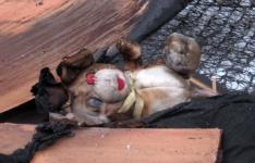 В Прииртышье во время пожара угорели двое малолетних детей