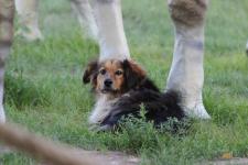 В Павлодаре собаку, ставшую знаменитой, усыпили