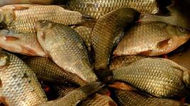 В Прииртышье полицейские изъяли у сельчанина почти 70 килограммов незаконно пойманной рыбы