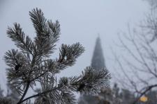 В Павлодаре утвердят места для продажи живых новогодних елок