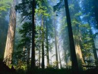 Пошли лесом
