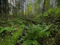 На 25 процентов планируют увеличить зарплату сотрудников лесного хозяйства в РК