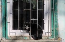 Вопрос обязательной стерилизации домашних животных обсуждают павлодарские депутаты и чиновники