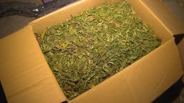 Свыше 300 килограммов марихуаны изъяли павлодарские полицейские