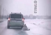 В полиции разыскивают водителя, тащившего по асфальту привязанную к машине собаку