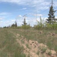 Разыгрывать тендеры на посадку деревьев на 3 года предложили экологи и подрядчик