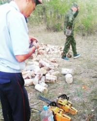 Десять тополей, срубленных браконьерами в лесфонде Павлодарской области, оценили в восемь тысяч тенге