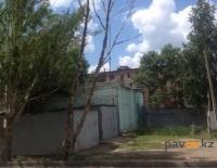 В Павлодаре три года не могут спилить сухое дерево во дворе жилого дома