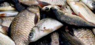 Рыба рыбе рознь