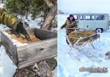 Люди спасают диких животных от голода