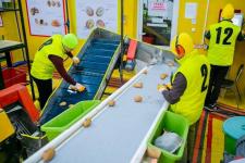 В Павлодаре запустили производство картофеля фри