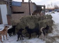 После пожара центру реабилитации бездомных животных в Экибастузе требуется помощь в восстановлении