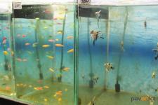 Открытие контактного аквариума в Павлодаре запланировано на август