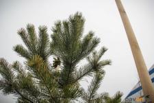 Более тысячи деревьев высадили на прошедшем субботнике в Павлодаре