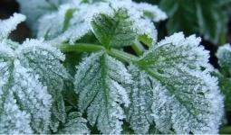 Казахстанские синоптики объявили штормовое предупреждение из-за заморозков