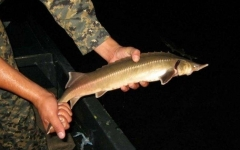 Россиянин наловил 48 килограммов рыбы в Павлодарской области и нанес ущерб на 11 миллионов тенге