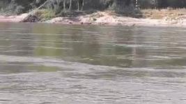 Прожорливые бакланы уничтожают рыбу в Иртыше