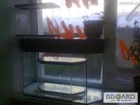 Продам аквариумы от 10 до 70 литров