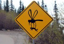 Комары терроризируют павлодарцев