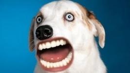 Кричащие человеческим ртом животные покорили интернет