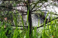 В Павлодаре молодые деревья поливают ежедневно
