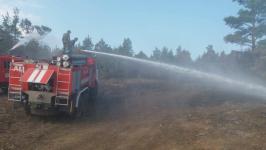 Пожар в Баянауле удалось локализовать