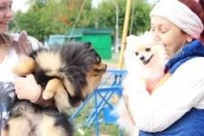 Более 70 собак разных пород участвовали в национальной выставке в Павлодаре