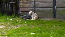 В Румынии собака пять лет ждет умершего хозяина у его дома (фото)