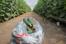Биоудобрения для повышенной урожайности производит павлодарский бизнесмен