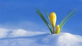 Весна придет в Казахстан с осадками и метелями