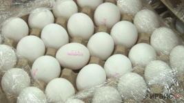 Яйцо со специальной маркировкой появилось в павлодарских магазинах