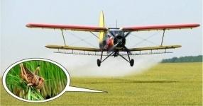 Больше 30 тысяч гектаров земли обработали для борьбы с нестадной саранчой в Павлодарской области