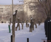 Павлодарцы возмущены и обеспокоены видом деревьев на территории одной из школ