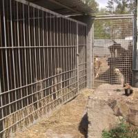 Павлодарские защитники животных просят о помощи