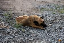 В Павлодарской области владельца собаки наказали за нападение животного на ребенка