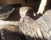 Птица в приюте для бездомных животных оказалась занесенной в Красную книгу