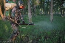 Жители Павлодара проигрывают в войне с мошкарой