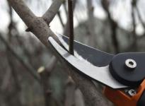В Павлодаре «постригут» старые деревья и посадят тысячи молодых