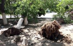 Для того, чтобы вовремя убирать упавшие деревья, в Павлодаре подрядчикам пришлось увеличить рабочее время