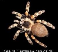 Куплю паука