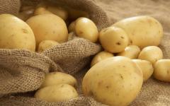 Руководитель управления сельского хозяйства посетовал на отсутствие в регионе предприятий по переработке картофеля