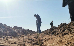 В Павлодарской области рассчитывают увеличить площадь лесов за счет высадки сосен