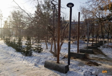 """Павлодарский биолог: """"Сносить любые из насаждений в городе – это рубить сук, на котором сидим"""""""