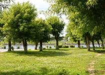 Павлодарские коммунальщики рассказали, куда жаловаться на сухостой