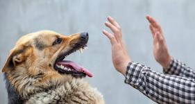 200 тысяч тенге обязался выплатить экибастузец за то, что его собака укусила ребенка