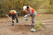 На Аксуском заводе ферросплавов поделились планами озеленения территории предприятия и города