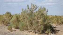 В Казахстане откроют центр по борьбе с опустыниванием