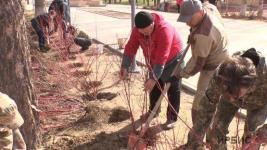 «Сад памяти» появился в Павлодаре