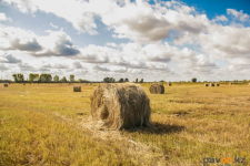 В двух районах Павлодарской области залоговые земли передали новым инвесторам