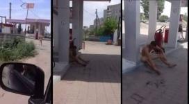 Голый мужчина разгуливал по Павлодару